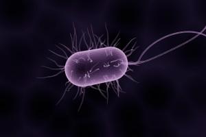 伤寒杆菌半固体运动怎么预防和治疗呢