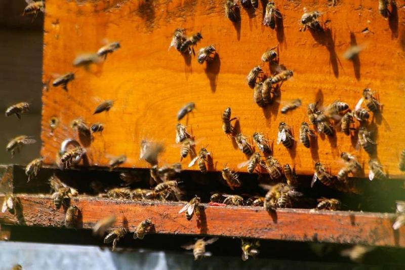 青光眼用蜂蜜治疗青光眼与蜂蜜间的联系